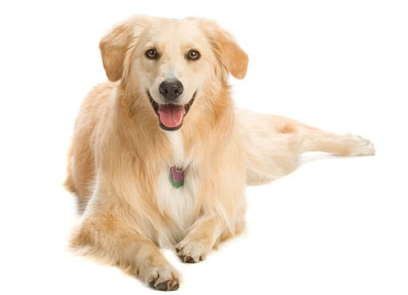 perro como mascota