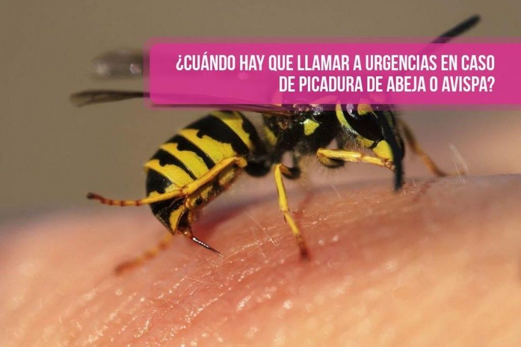 ¿Cuándo hay que llamar a urgencias en caso de picadura de abeja o avispa?